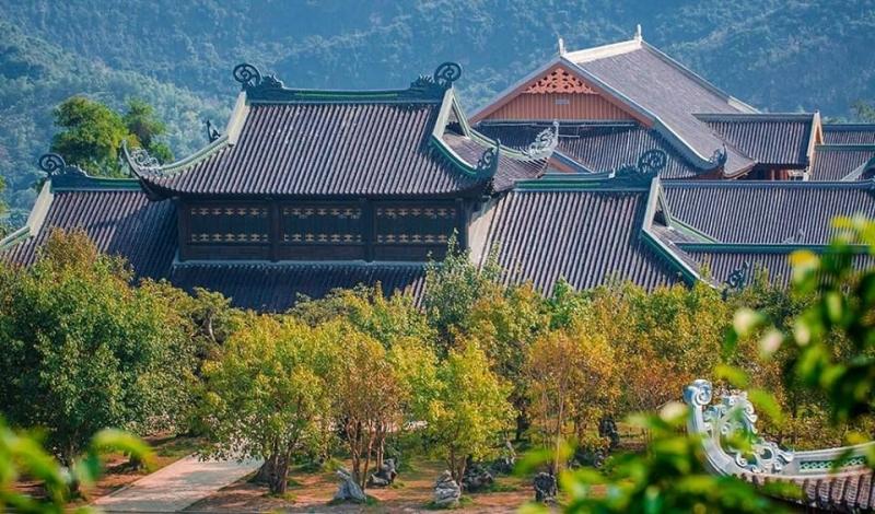 Xung quanh chùa Bái Đính được trồng nhiều cây bồ đề