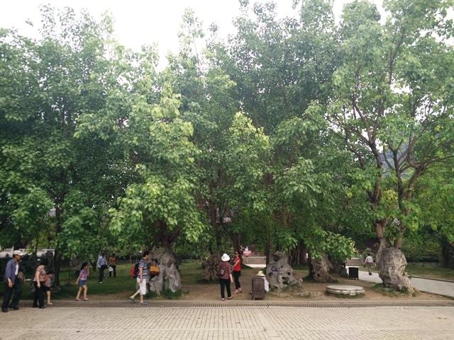 Chùa Bái Đính là ngôi chùa trồng nhiều bồ đề nhất nước ta từ trước đến nay