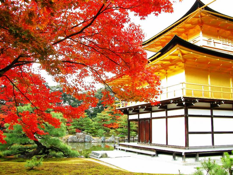 Khung cảnh chùa vàng Kinkakuji vào mùa thu