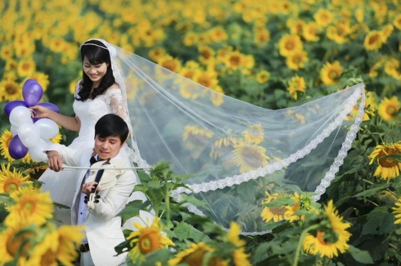 Hình ảnh đôi chụp ảnh cưới tại Đồi hoa hướng dương