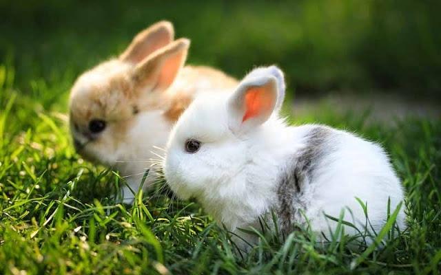 Nhìn 2 chú thỏ dưới nắng rực rỡ thật xinh đẹp