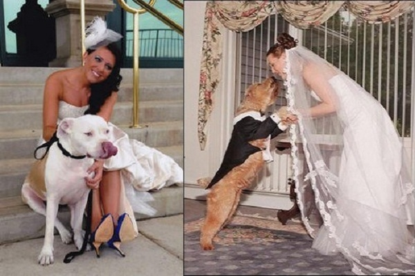 Cô dâu kết hôn với động vật để trừ tà ma là tập tục ở một số khu vực của Ấn Độ