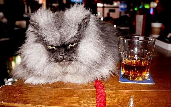 Chú mèo mang vẻ mặt hung dữ