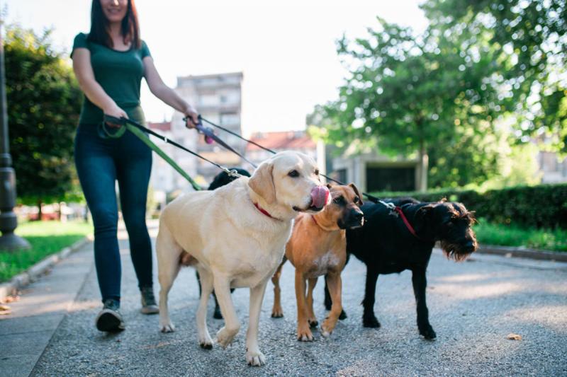 Con chó bạn dắt đi quá xa với bạn