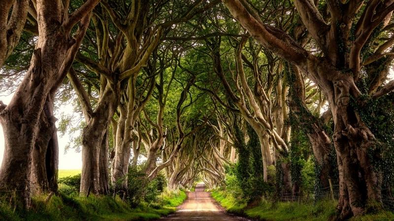 Con đường cây ma mị, Ireland