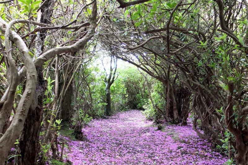 Con đường hoa tím đầy lãng mạn
