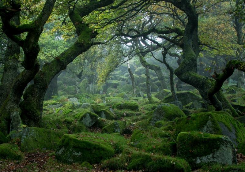 Phủ đầy rêu xanh vô cùng huyền bí như trong truyện cổ tích