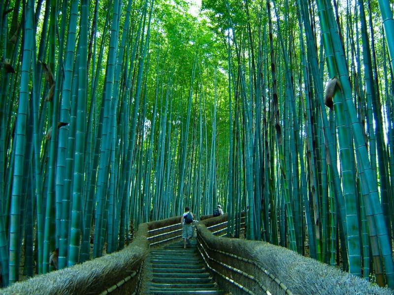 Đi sâu vào trong là những bậc thang dẫn lối lên khu đền trên núi