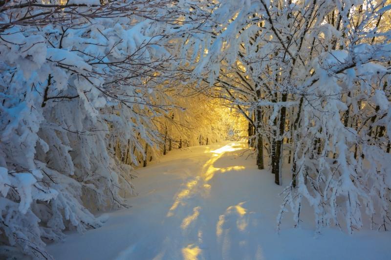Ánh sáng mặt trời thì len lói chớp tắt càng tạo nên không gian cổ tích đầy huyền ảo.