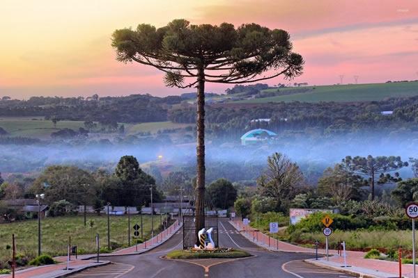 Con đường xây quanh cái cây tại Brazil