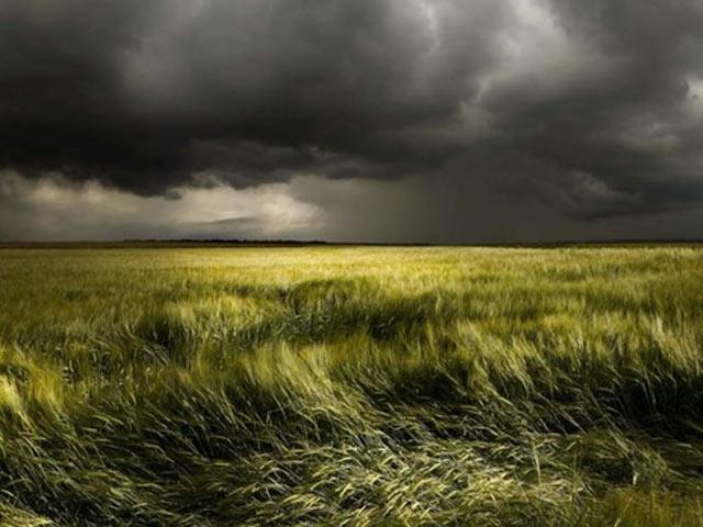 Mưa dông bất ngờ trên cánh đồng