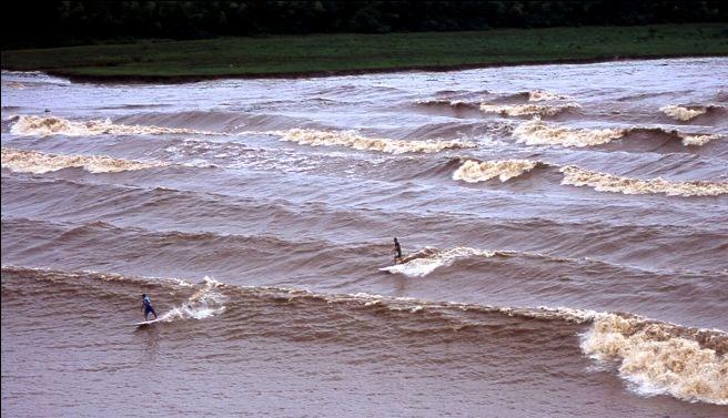 Con sóng dài nhất thế giới
