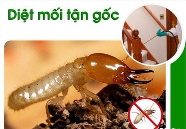 Top 12 công ty diệt côn trùng, mối tại nhà ở Đà Nẵng