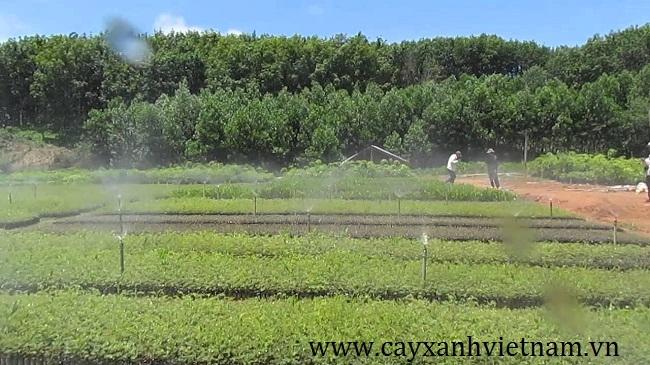 Vườn cây ươm giống tại Cây xanh Việt Nam