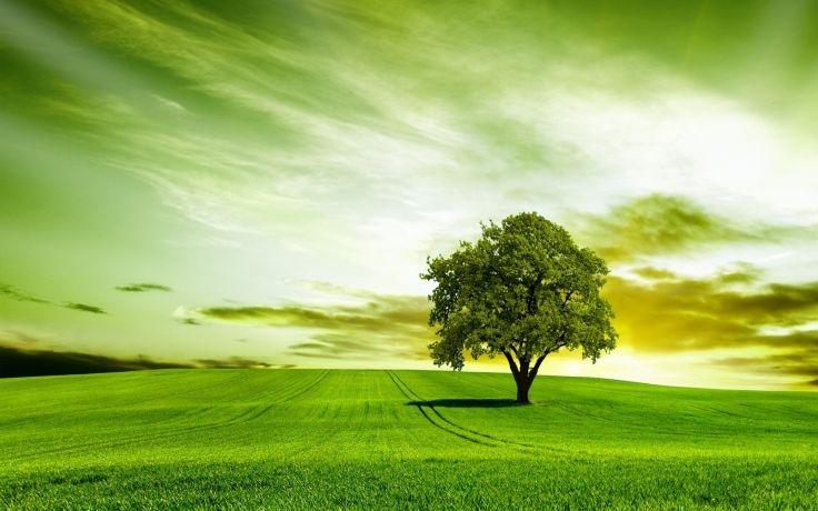 Dịch vụ tạo dựng cây xanh, cảnh quan làm cho khuôn viên ngôi nhà thêm trong lành