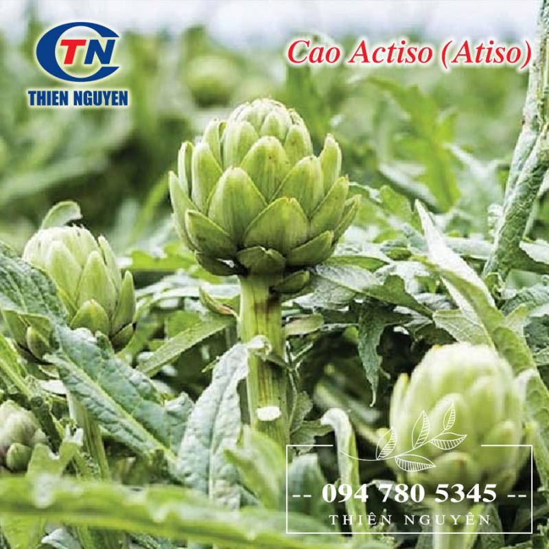 Cao Actiso - Một sản phẩm của chi Nhánh Công Ty Cổ Phần Dược Phẩm Thiên Nguyên