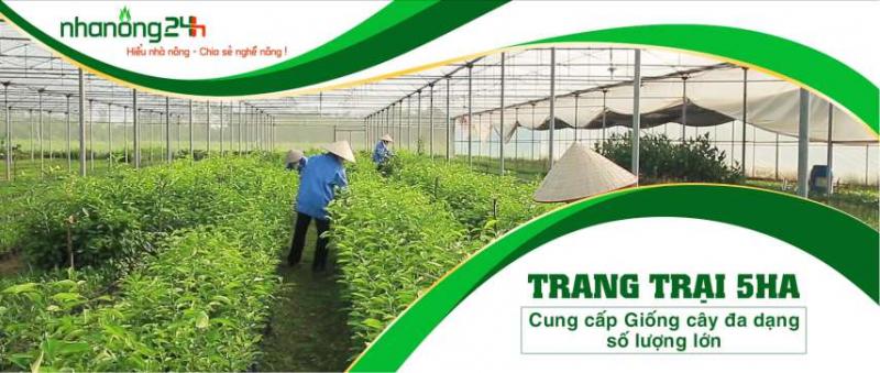 Công ty Cổ phần Hệ sinh thái Công nghệ Việt Nam (NHANONG24H)
