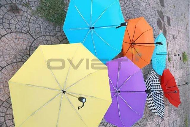 Ô dù cầm của Ô Việt