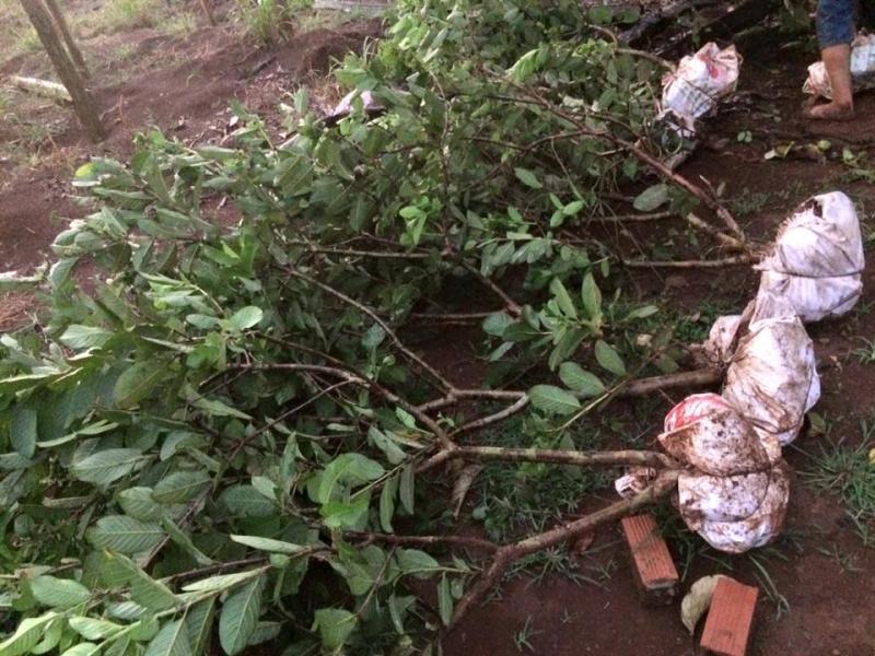 Những cây giống chuẩn bị xuất ra thị trường của CÔNG TY CỔ PHẦN SX – TM – DV ĐÔNG NAM