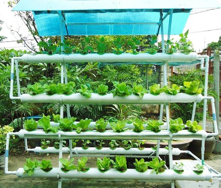 Phương pháp trồng rau của Công ty công nghệ tươi Quang Vinh