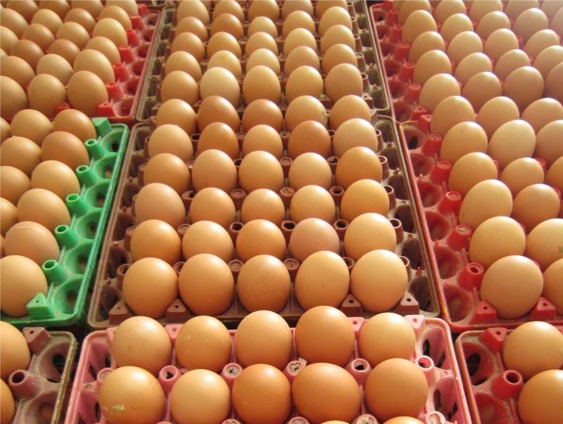 Top 10 công ty cung cấp trứng gia cầm sạch tại Việt Nam