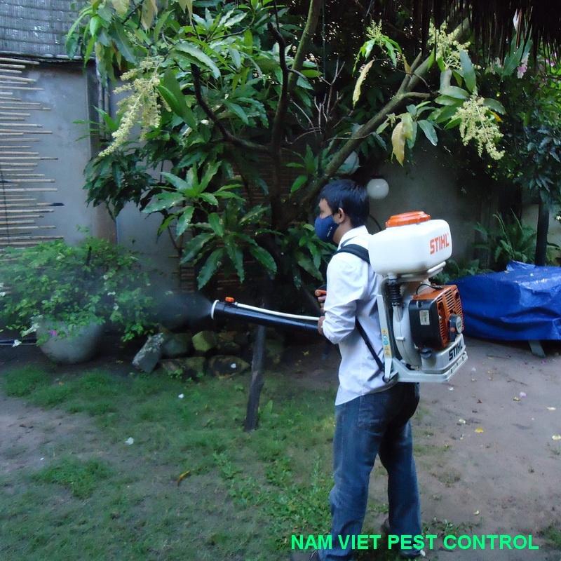 Dịch vụ diệt mối của công ty Đại Việt Pest Control