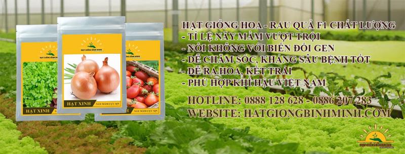 Công ty hạt giống Bình Minh