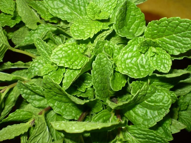 Đức Thắng Seed có bán các loại hạt giống rau như: hạt giống rau húng quế, hạt giống rau cải cúc,...