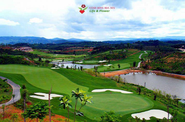 Dự án chăm sóc cây cảnh của công ty TNHH cây xanh cảnh quan Hoa Sen Việt