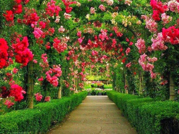 Giống cây hoa có chất lượng tốt mang lại sự hài lòng cho mọi khách hàng
