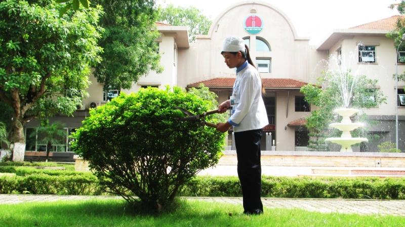 Công ty còn có dịch vụ chăm sóc, cắt tỉa cây cảnh cho các khách sạn, công ty, bệnh viện.