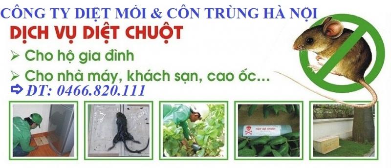 Công ty TNHH diệt mối và côn trùng Hà Nội
