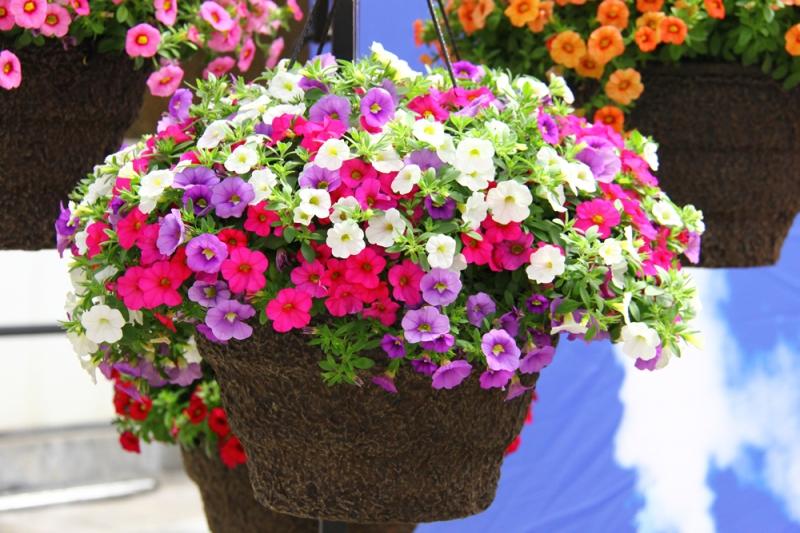 Hạt giống hoa tại công ty