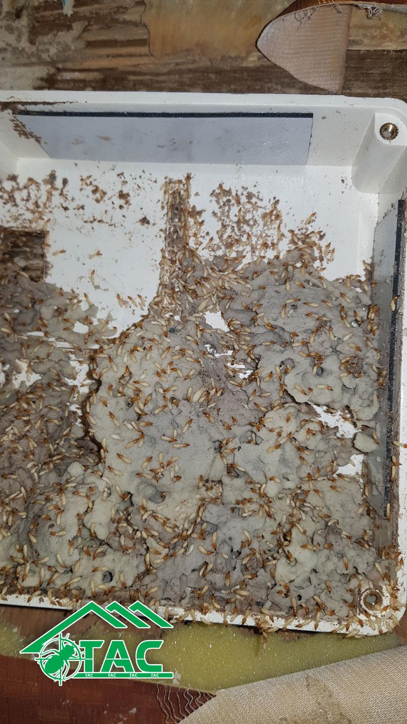 Công ty TNHH phòng trừ mối và diệt côn trùng Trần Anh