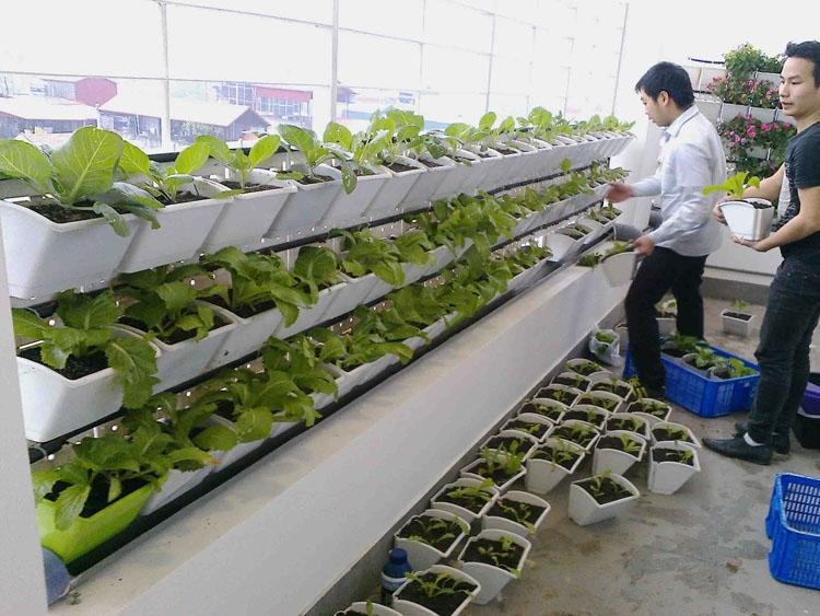 Ý tưởng trồng rau của công ty TNHH Thành Tâm Phát