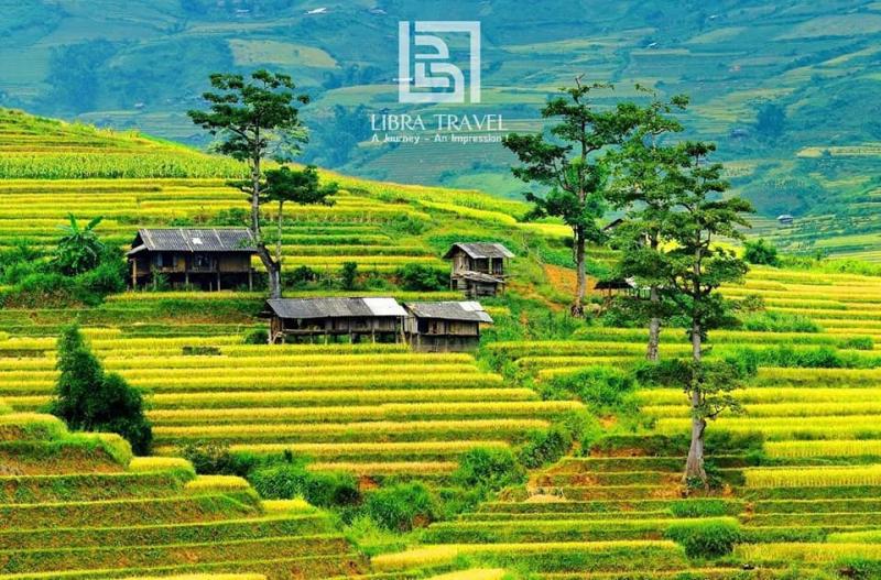 Công ty TNHH TMDV lữ hành quốc tế Libra