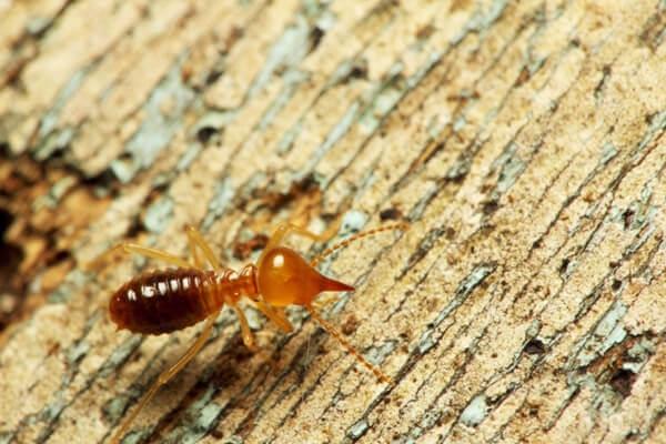 Công ty ASIA Việt Nam là đơn vị hoạt động chuyên nghiệp trong các lĩnh vực diệt mối, gián, chuột, côn trùng và các loài sâu bọ.