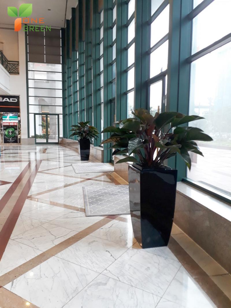 Công ty Vinatrees công ty cây cảnh số 1 tại Hà Nội - đơn vị cung cấp dịch vụ cho thuê cây cảnh văn phòng, cho thuê cây xanh văn phòng, nội thất, Cây cảnh sự kiện,...