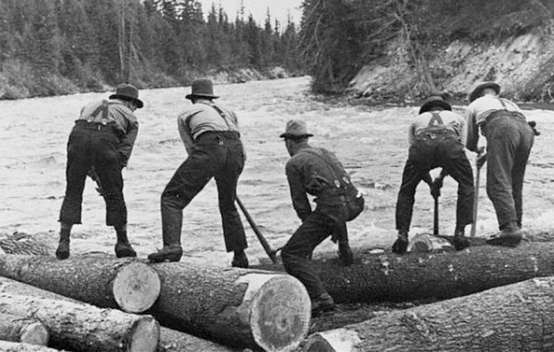Thợ lái gỗ