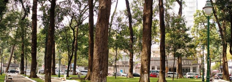 Cây xanh tại công viên 30-4