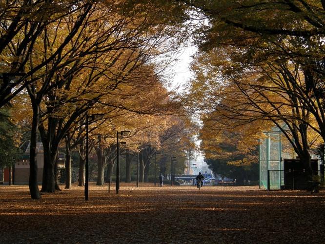 Một hình ảnh đẹp tại Kinuta