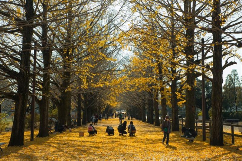 Công viên Showa Kinen - Nhật