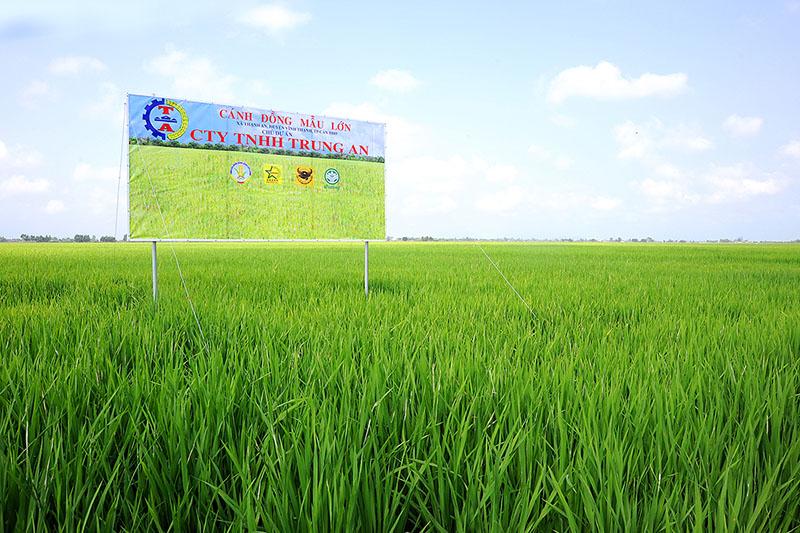 CTCP Nông nghiệp công nghệ cao Trung An