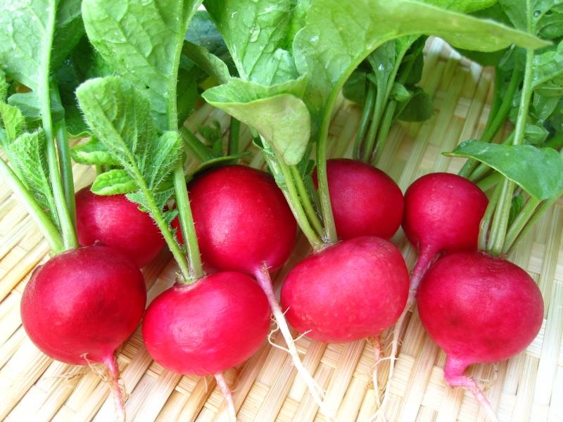 Củ cải đỏ đang là loại cây cảnh đứng đầu bảng thị trường Tết Đinh Dậu năm nay