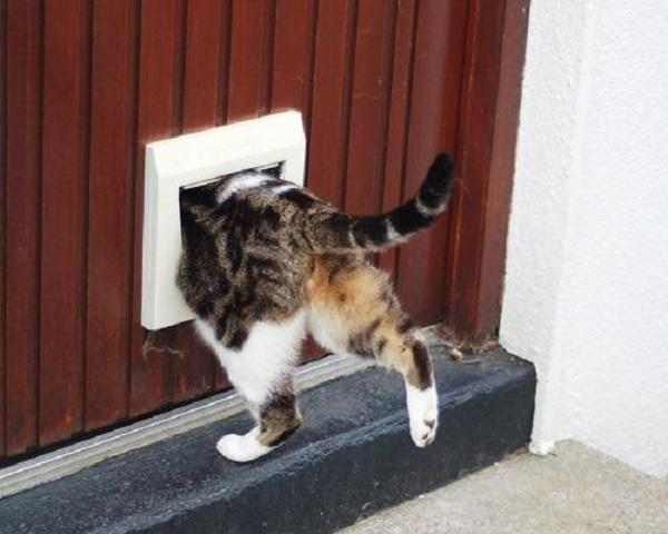 Cửa cho mèo