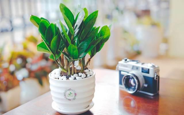 Top 6 Cửa hàng bán cây cảnh mini, cây cảnh để bàn đẹp nhất Hà nội