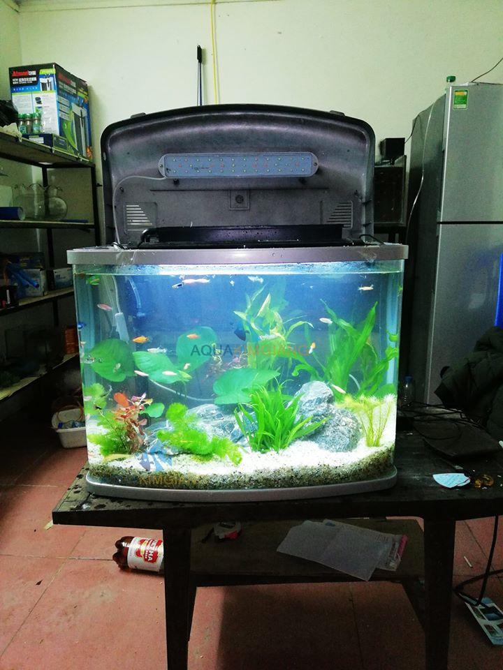 Cửa hàng cá cảnh Kim Giang