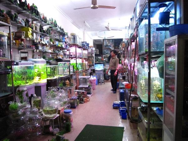 Cửa hàng cá cảnh Sơn Yến