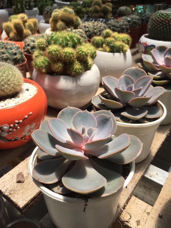 Cửa hàng cây và hoa tại Huế
