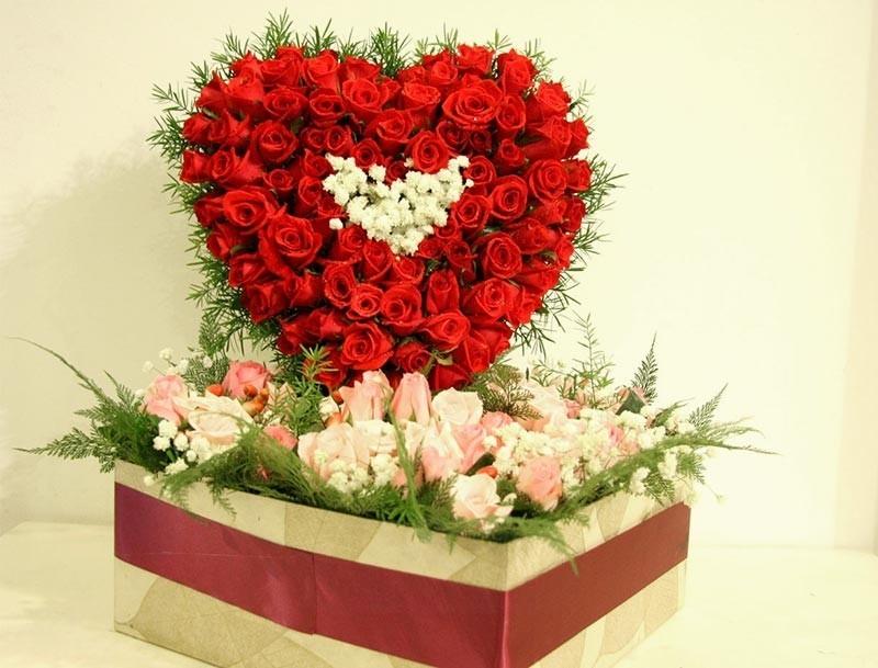 Những bông hoa hồng đỏ vô cùng quyến rũ